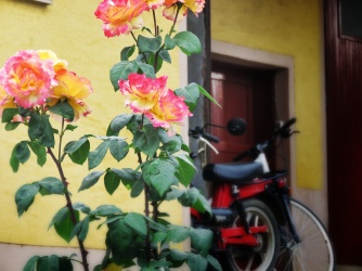 Roses and Bicis at Vizir - Slovenia - by Anika Mikkelson - Miss Maps - www.MissMaps.com
