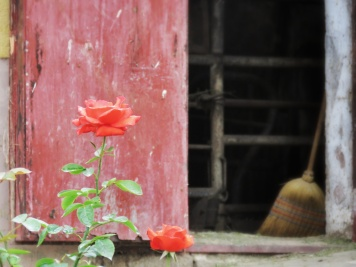 Roses and Brooms at Vizir - Slovenia - by Anika Mikkelson - Miss Maps - www.MissMaps.com