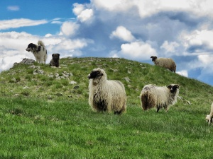 Sheep and Dogs on the Mountaintops of Bosnia and Herzegovina - by Anika Mikkelson - Miss Maps www.MissMaps.com