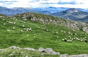 Sheep in the Mountains near Lukomir BiH - by Anika Mikkelson - Miss Maps - www.MissMaps.com