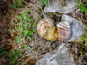 Snails 'kissing' -- Bosnia and Herzegovina - by Anika Mikkelson - Miss Maps www.MissMaps.com