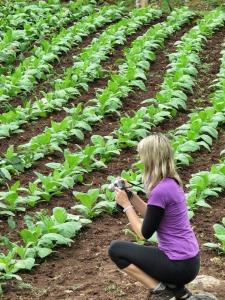 Tobacco Fields at Marica Gaj - Bosnia and Herzegovina - by Anika Mikkelson - Miss Maps - www.MissMaps.com