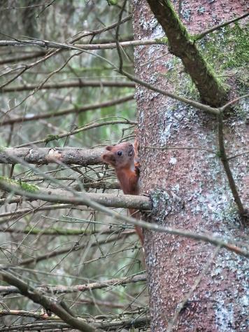 A single squirrel friend - National Park Belovezhskaya Pushcha - by Anika Mikkelson - Miss Maps - www.MissMaps.com
