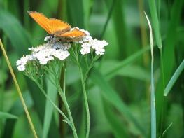And a butterfly to match - National Park Belovezhskaya Pushcha - by Anika Mikkelson - Miss Maps - www.MissMaps.com