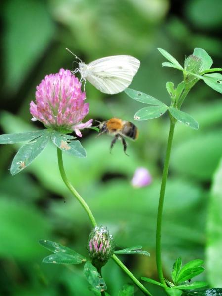 Butterflies and the Bees - National Park Belovezhskaya Pushcha - by Anika Mikkelson - Miss Maps - www.MissMaps.com