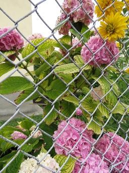 Every home has a garden - Nitra Slovakia - by Anika Mikkelson - Miss Maps - www.MissMaps.com