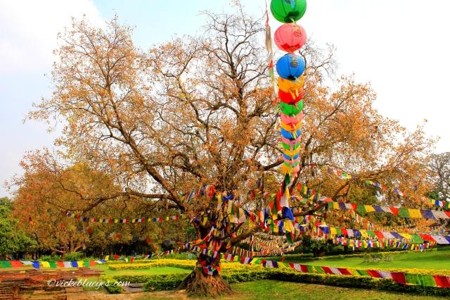 Lumbini Nepal - photo by Vicky Carter - MissMaps.com Featured Female Traveler