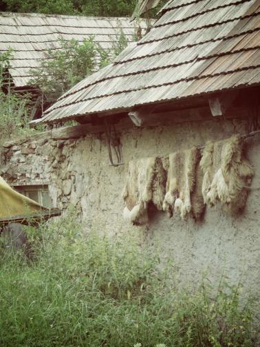 Sheep Skins Hanging - Slovakia - by Anika Mikkelson - Miss Maps - www.MissMaps.com