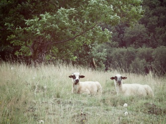 Sheep Waiting in the Hills - Slovakia - by Anika Mikkelson - Miss Maps - www.MissMaps.com
