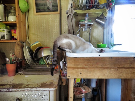 Cat in the sink - Southern Estonia - by Anika Mikkelson - Miss Maps - www.MissMaps.com