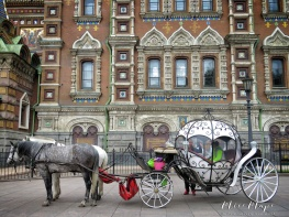 Horse and Carriage - St Petersburg Russia - by Anika Mikkelson - Miss Maps - www.MissMaps.com