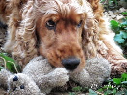 The pup and his teddy - Northern Estonia - by Anika Mikkelson - Miss Maps - www.MissMaps.com