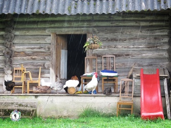 When it rains everyone seeks shelter - even the rooster and hens - South Estonia - by Anika Mikkelson - Miss Maps - www.MissMaps.com