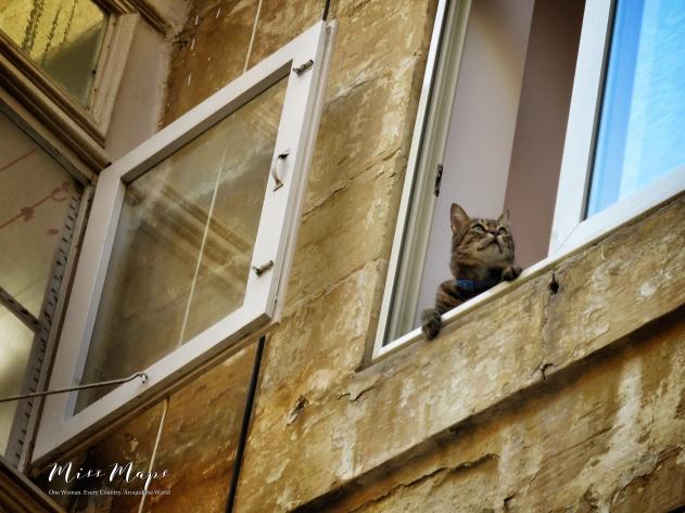 The Curious Cat - Malta - by Anika Mikkelson- Miss Maps - www.MissMaps.com