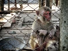 Monkey Cages -Sundarbans of Bangladesh - by Anika Mikkelson - Miss Maps - www.MissMaps.com