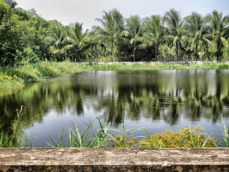 Crocodile Ponds in the Sundarbans near Mongla Bangladesh - by Anika Mikkelson - Miss Maps - www.MissMaps.com