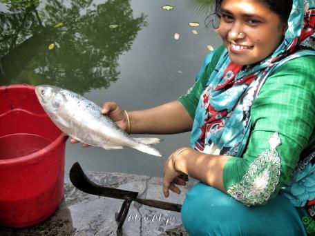 Mom Preparing Ilish - Bangladesh's National Fish - Mongla Bangladesh - by Anika Mikkelson - Miss Maps - www.MissMaps.com