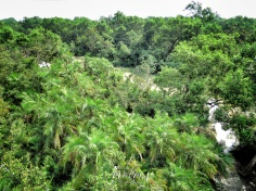 Views From above the Sundarbans - Sundarbans Near Mongla Bangladesh - by Anika Mikkelson - Miss Maps - www.MissMaps.com