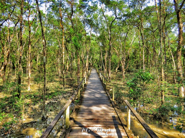 Walking through the Mangroves - Sundarbans Near Mongla Bangladesh - by Anika Mikkelson - Miss Maps - www.MissMaps.com
