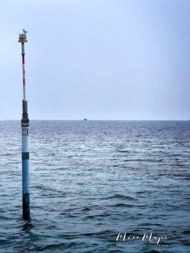 Bird on a Buoy - Indian Ocean Maldives - by Anika Mikkelson - Miss Maps - www.MissMaps.com