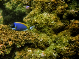 Finding Dory - Indian Ocean Maldives - by Anika Mikkelson - Miss Maps - www.MissMaps.com