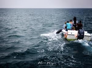 Headed Toward a School of Dolphins - Indian Ocean Maldives - by Anika Mikkelson - Miss Maps - www.MissMaps.com