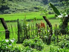 Tea Garden - Sylhet Bangladesh - by Anika Mikkelson - Miss Maps - www.MissMaps.com
