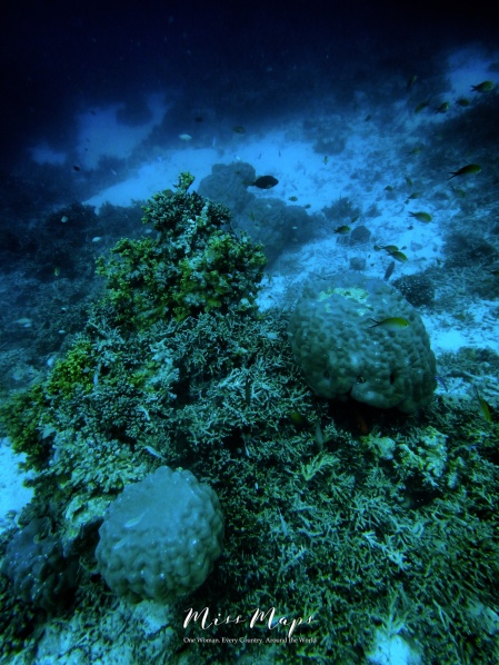 Underwater World - Indian Ocean Maldives - by Anika Mikkelson - Miss Maps - www.MissMaps.com