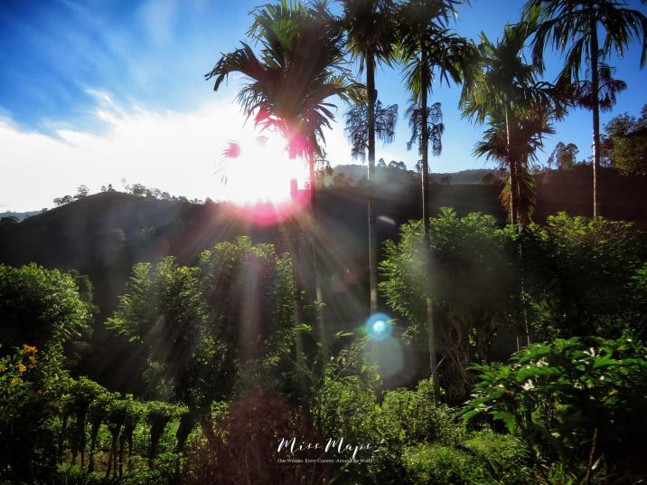 Palm Trees and Sun Spots - Views from the Train - Ella to Kandy - Sri Lanka - by Anika Mikkelson - Miss Maps - www.MissMaps.com