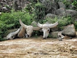 Skeleton Gatherings - Yala National Park - Sri Lanka - by Anika Mikkelson - Miss Maps - www.MissMaps.com