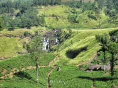 Waterfalls and Tea Plantations - Views from the Train - Train Ride Ella to Kandy Sri Lanka - by Anika Mikkelson - Miss Maps - www.MissMaps.com