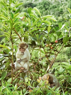 Baby Monkey in the Trees - Mauritius - by Anika Mikkelson - Miss Maps - www.MissMaps.com
