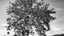 Basketball Tree in Black and White - Rusinga Island Kenya - by Anika Mikkelson - Miss Maps - www.MissMaps.com
