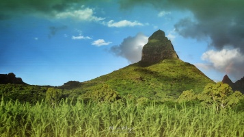 Fields and Mountains - Mauritius - by Anika Mikkelson - Miss Maps - www.MissMaps.com