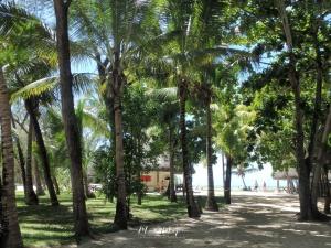 Palms - Ile aux Cerfs - Mauritius - by Anika Mikkelson - Miss Maps - www.MissMaps.com