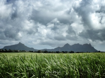 Sugar Cane and Thunderous Mountains - Mauritius - by Anika Mikkelson - Miss Maps - www.MissMaps.com