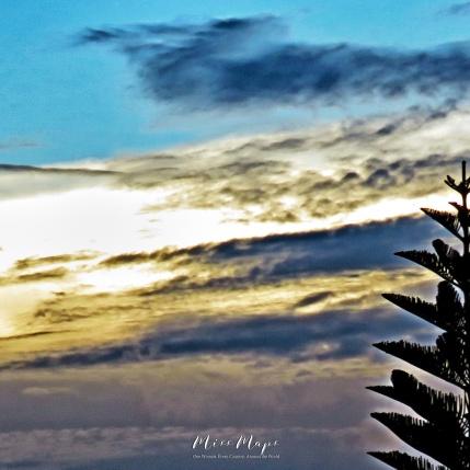 Sunset Spruce - Mauritius - by Anika Mikkelson - Miss Maps - www.MissMaps.com