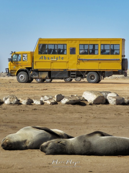 Absolute Africa Truck and Seals - Namibia - by Anika Mikkelson - Miss Maps - www.MissMaps.com