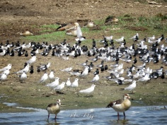 Birds and Ducks - Queen Elizabeth National Park - Uganda - by Anika Mikkelson - Miss Maps - www.MissMaps.com