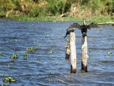 Black Bird - Lake Nakuru Kenya - by Anika Mikkelson - Miss Maps - www.MissMaps.com