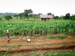 Children Walking Through Rural Uganda - by Anika Mikkelson - Miss Maps - www.MissMaps.com