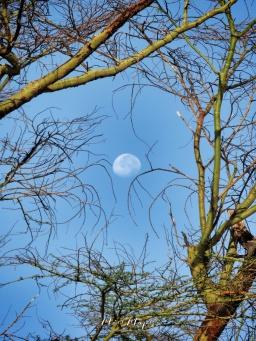 Morning Moon - Lake Nakuru Kenya - by Anika Mikkelson - Miss Maps - www.MissMaps.com