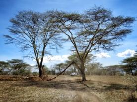 Nature Made Bridge - Lake Nakuru Kenya - by Anika Mikkelson - Miss Maps - www.MissMaps.com