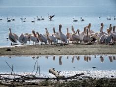 Pelican Reflections and Flamingos - Lake Nakuru Kenya - by Anika Mikkelson - Miss Maps - www.MissMaps.com