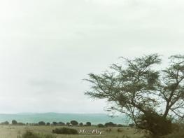 Queen Elizabeth National Park - Uganda - by Anika Mikkelson - Miss Maps - www.MissMaps.com