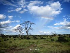 Rainbow Over Serengeti National Park - Tanzania - by Anika Mikkelson - Miss Maps - www.MissMaps.com