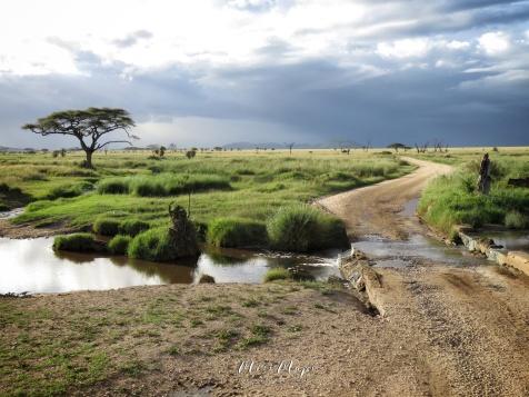 Rivered Road - Serengeti National Park - Tanzania - by Anika Mikkelson - Miss Maps - www.MissMaps.com