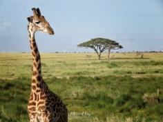 Twigga Modeling Shot - Serengeti National Park - Tanzania - by Anika Mikkelson - Miss Maps - www.MissMaps.com