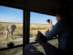 Up Close With the Elephants - by Anika Mikkelson - Miss Maps - www.MissMaps.com