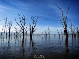 Water Trees - Lake Nakuru Kenya - by Anika Mikkelson - Miss Maps - www.MissMaps.com